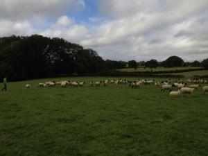 ewes1